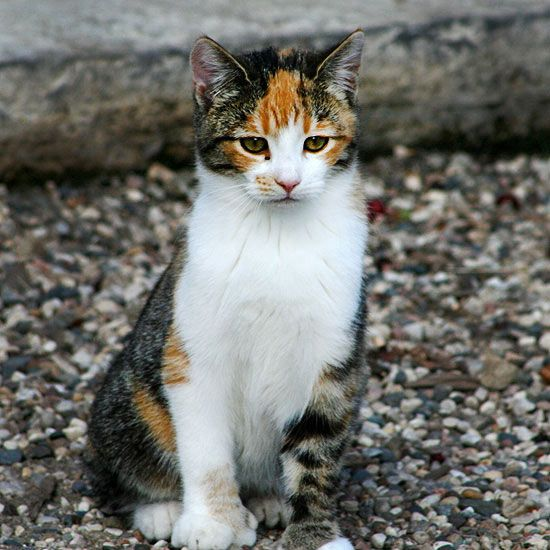 What Color Is Your Cat Tabby Cat Tortoise Shell Cat Orange Tabby Cats
