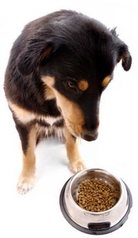 Dry Or Wet Dog Food Which Is Better Dog Food Recipes Dry Dog
