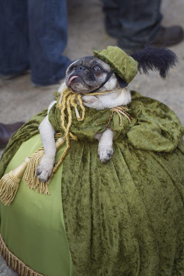 фото смешных костюмов для животных