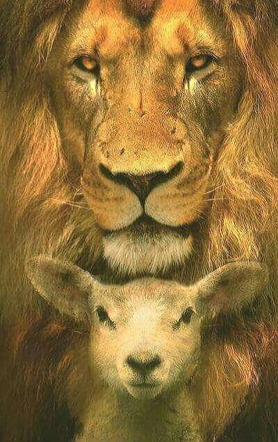 Pin By Diane Collard On What I Believe In Lion Lamb Lion Of