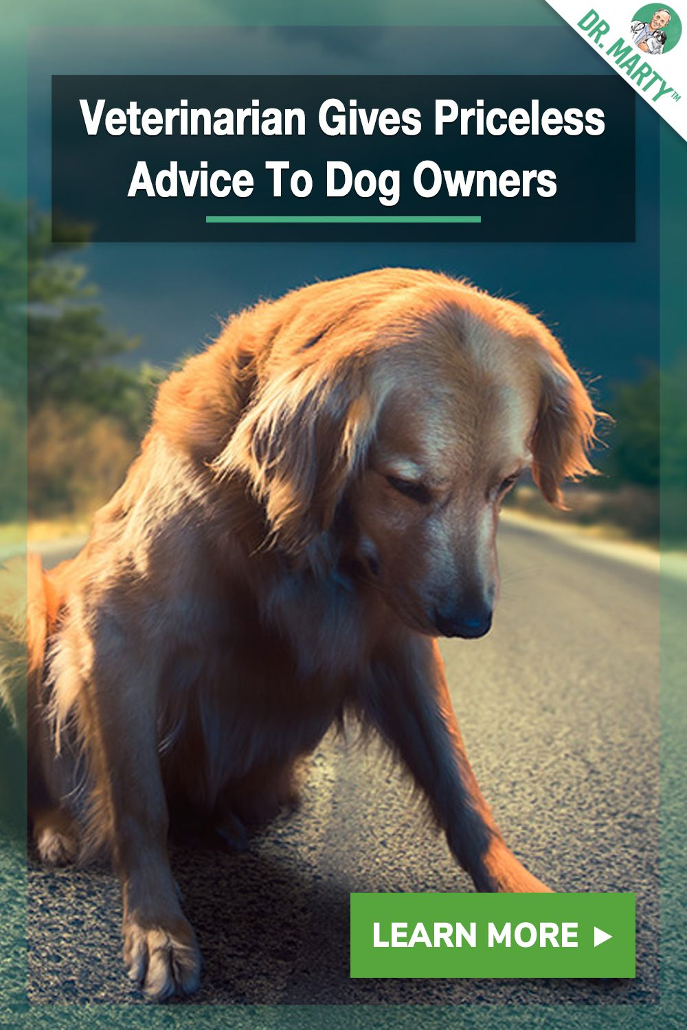 Veterinarian Gives Priceless Advice To Dog Owners With Images