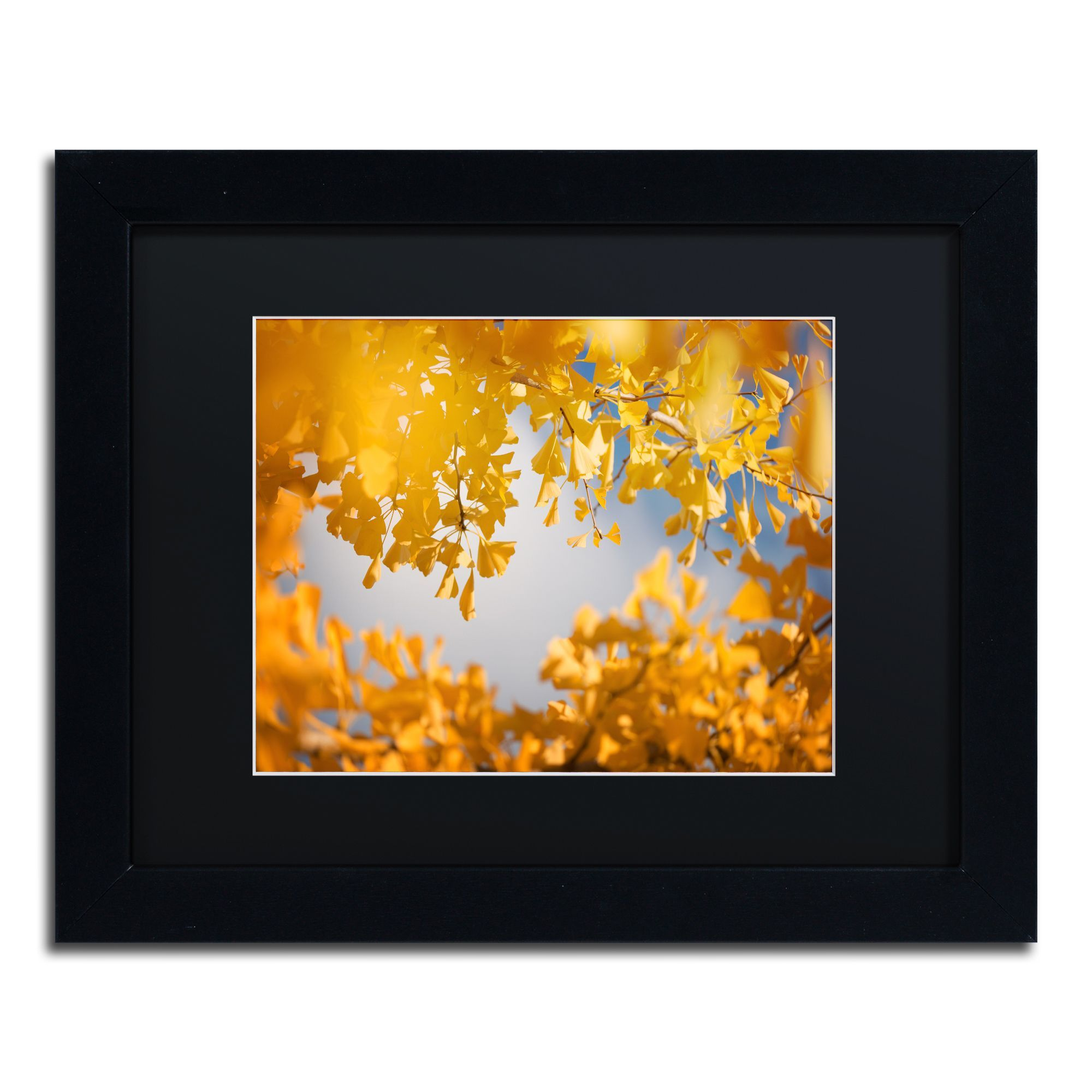 Philippe Sainte-Laudy \'Ginkgophytes\' Matte, Framed Wall Art ...