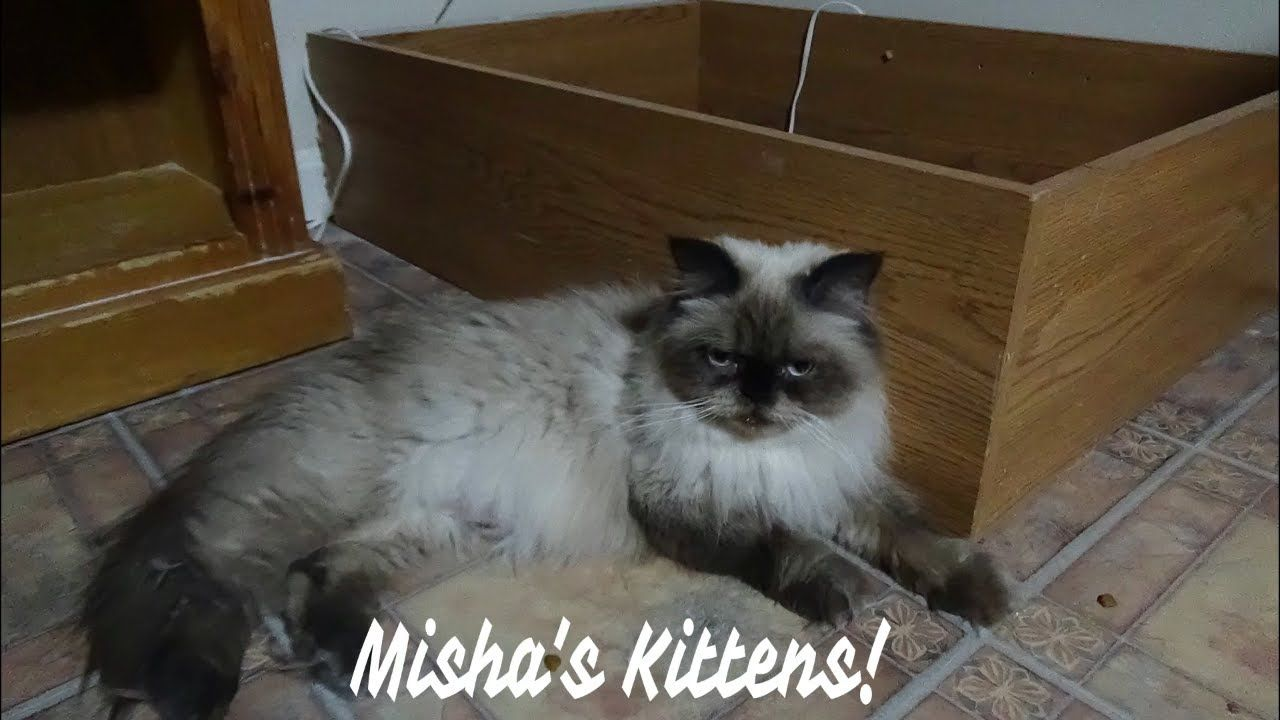 Misha S Kittens Turned 4 Weeks Old We Lost The Failure To Thrive Kitten Failure To Thrive Kittens Kitten Care