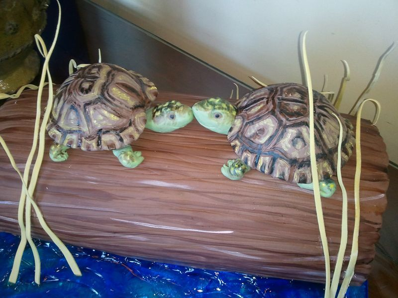 love these sweet turtles!
