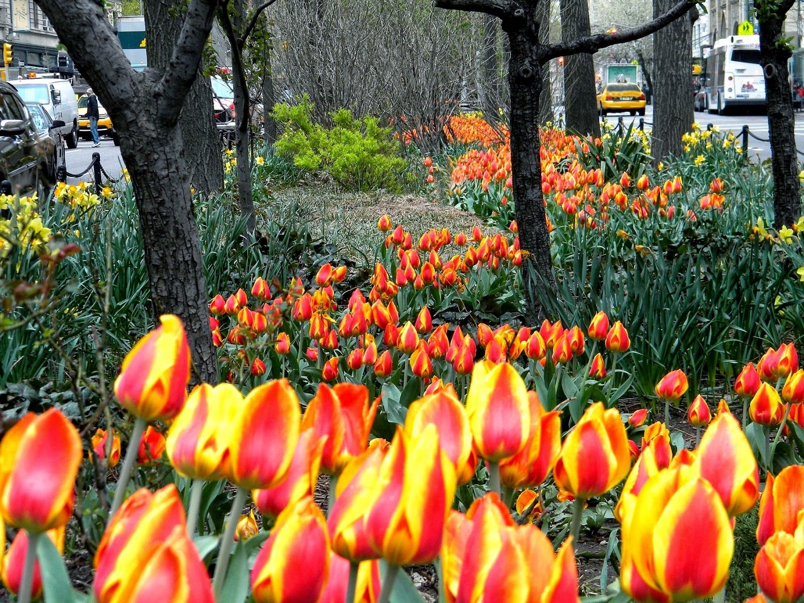 Spring Flowers New York City Public Domain Clip Art | Spring ...