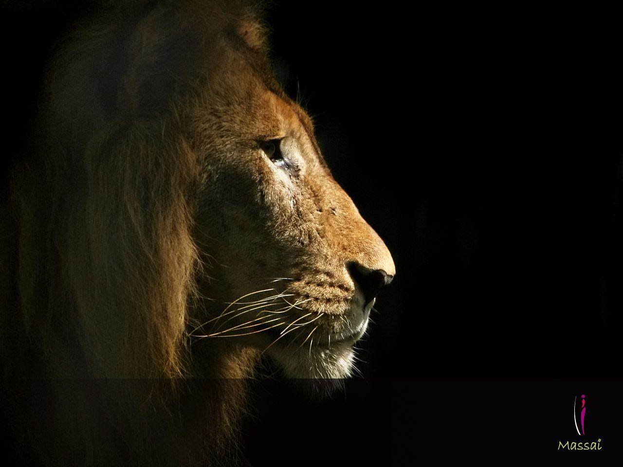 Le king !