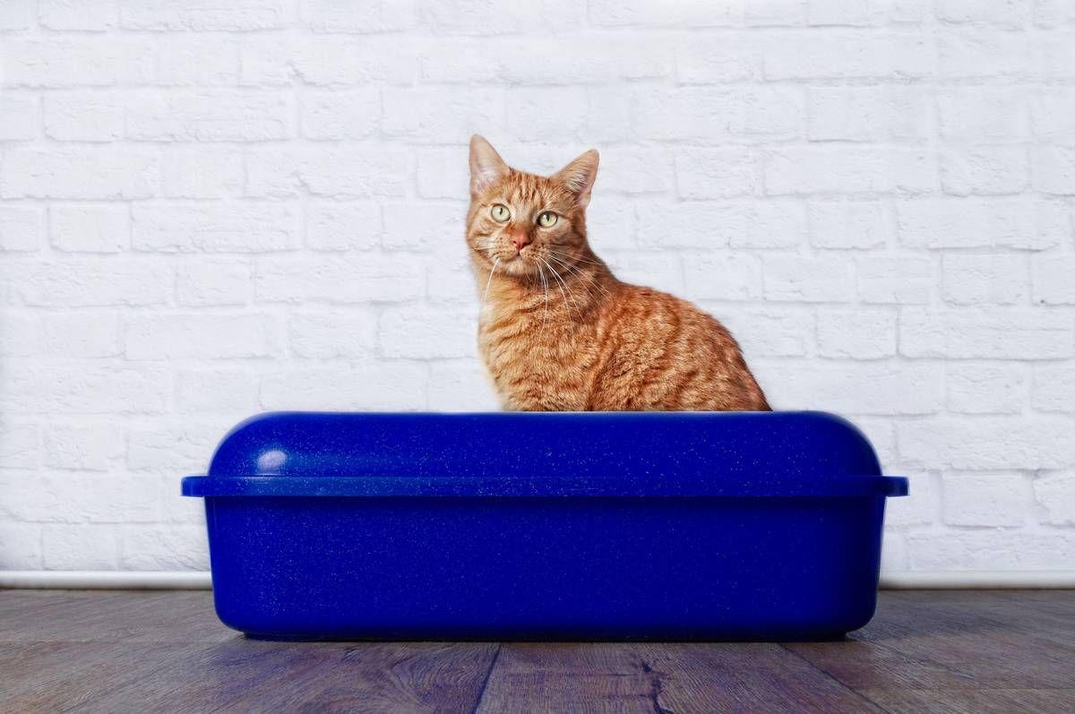 9 litter box tips for a happy cat litter tray litter
