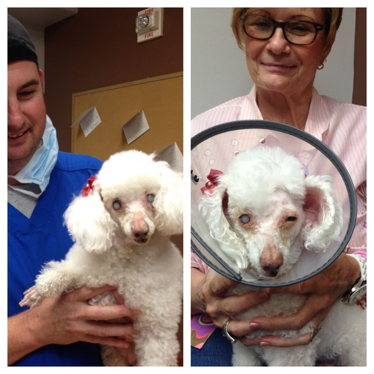 Wilma Is One Of 93 Puppy Mill Survivors Who Found Her Way To The