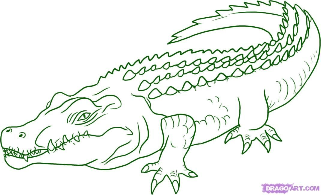 how-to-draw-a-crocodile-step-5_1_000000005853_5jpg (1070×652 - new alligator coloring pages to print