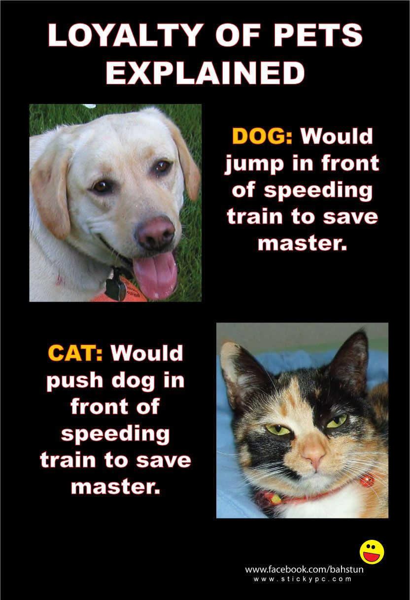 funny kitten cat dog puppy loyal pets will do anything for