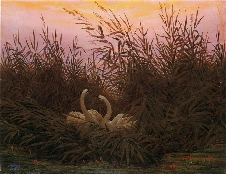 Swans among the reeds at the first Morgenro - Caspar David Friedrich