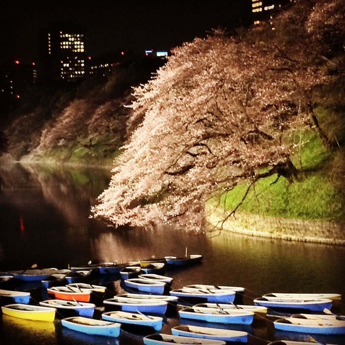 Boats under the cherry blossoms at Imperial garden | LoveJapan ...