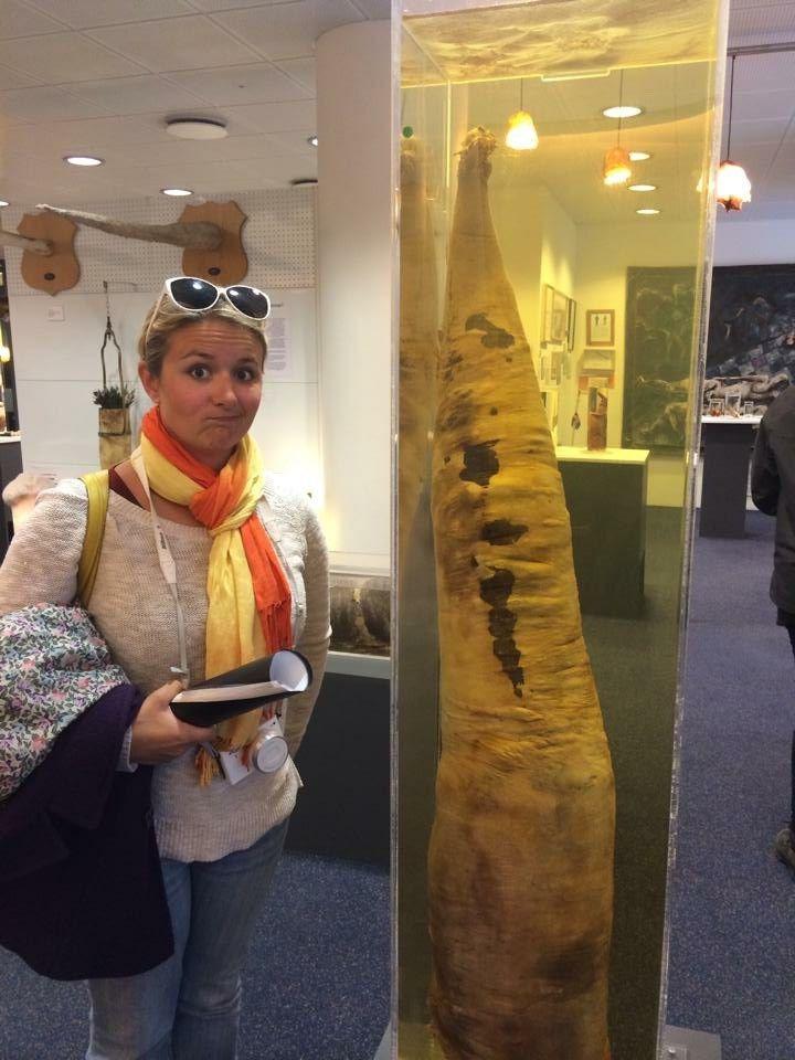 penis museum london