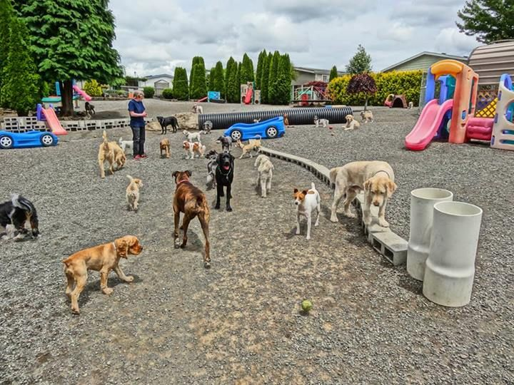 This is the best Doggie Daycare anywhere! Cat playground