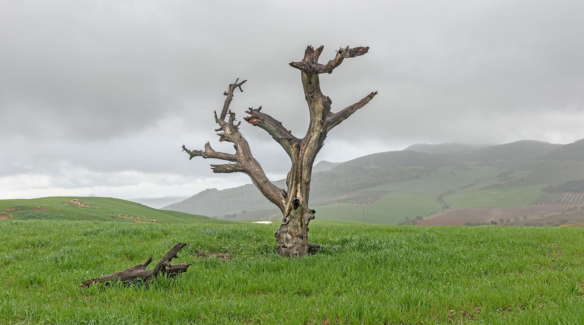 U2 -The Joshua Tree