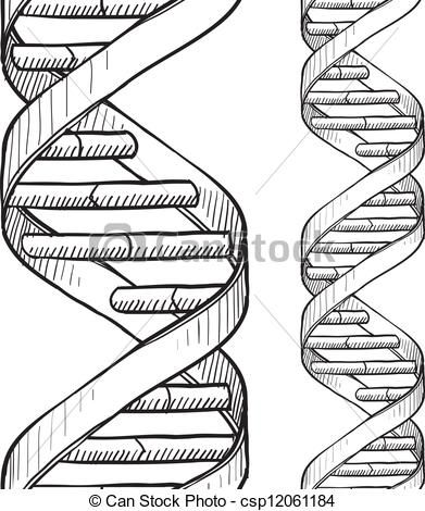 Pencil Drawing Dna Helix