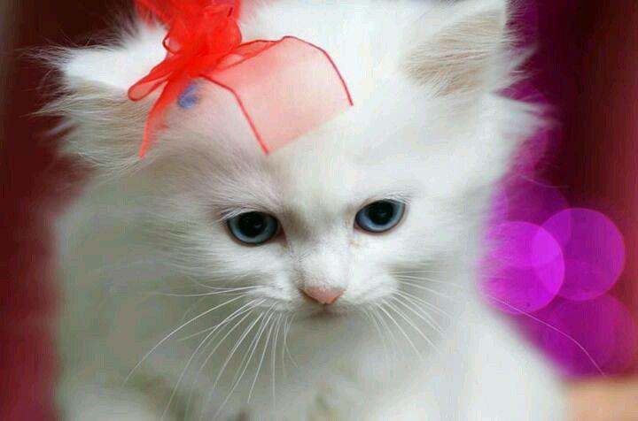 What a cute