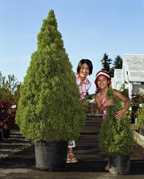 Potted Trees That Stay Green In Cold Weather