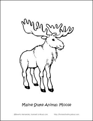 Maine Fun Facts Printables: Maine State Animal Coloring Page   Moose