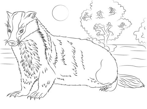 Ilustracion Tejon Dibujo Para Colorear Paginas Para Colorear De Animales Paginas Para Colorear Dibujos