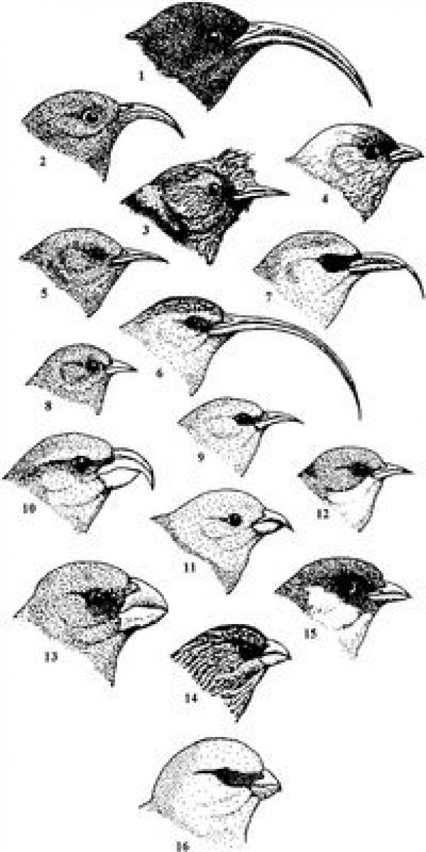 Darwin S Finches Worksheet - worksheet