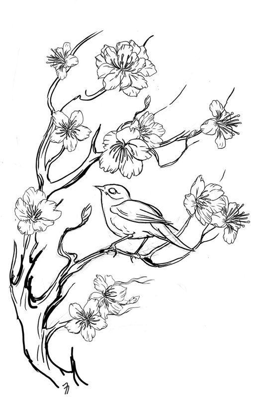 Croquis Sakura Pour Tattoo Oiseaux A Colorier Art De Fleur De