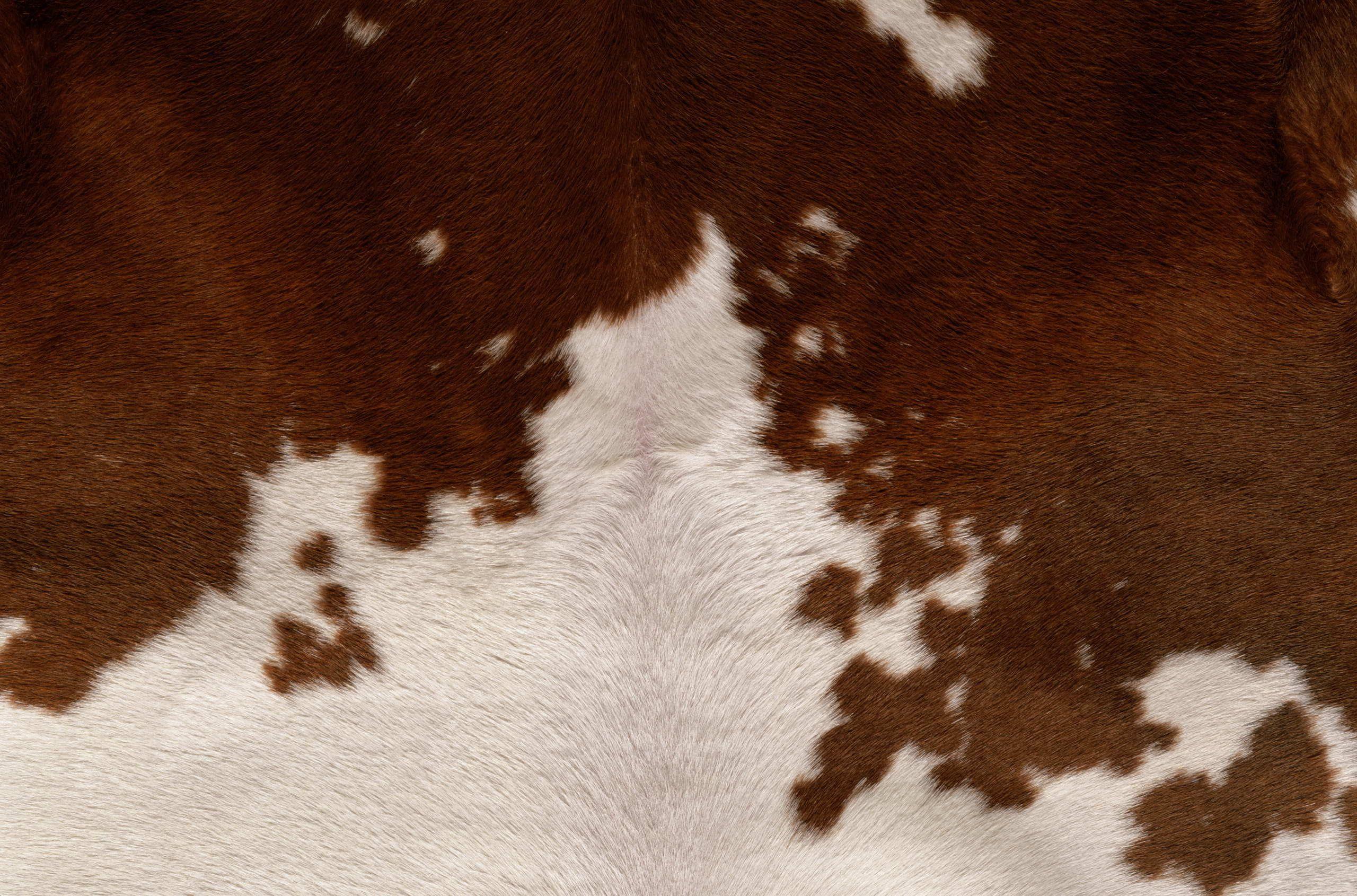 You Cow Metal Art Prints Art Prints Brown Cowhide