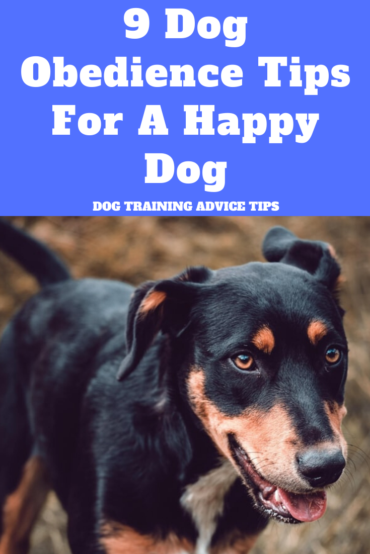 9 Dog Obedience Tips For A Happy Dog Dog Training Advice Dog