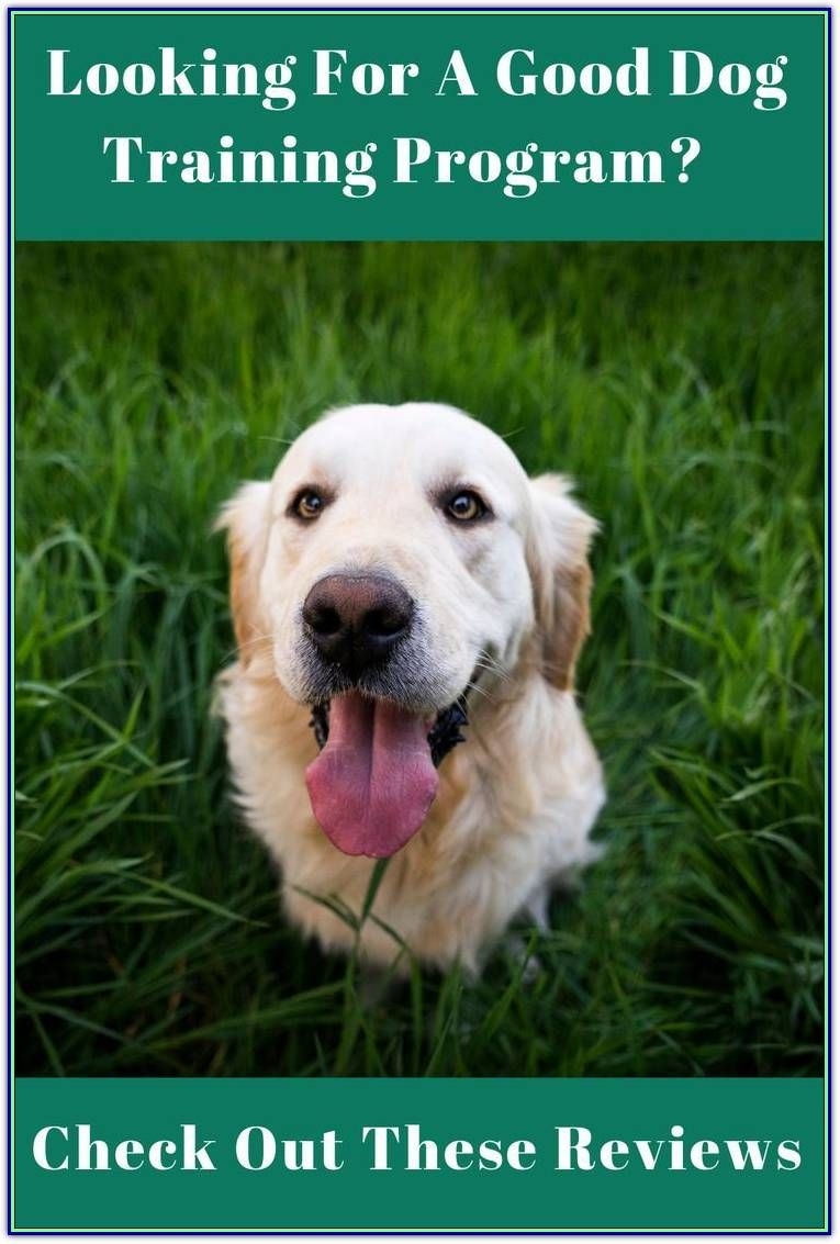 Dog Training Treats Will Bring You Closer To Your Dog Dog Training Aggressive Dog Online Dog Training