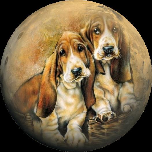 что, круглые картинки собак она решила