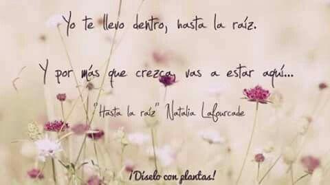 Hasta La Raíz Natalia Lafourcade Frases De Canciones Frases Hasta La Raiz Natalia