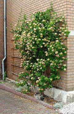 Garden Screening Ideas Privacy Hedge