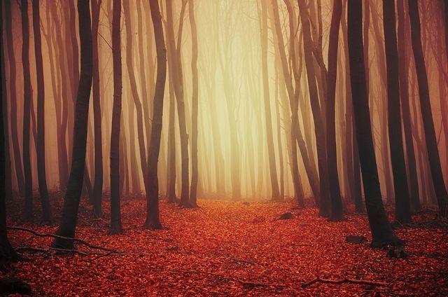 Autumn Wonder II  by Zsolt Zsigmond (500px: Editors' Choice