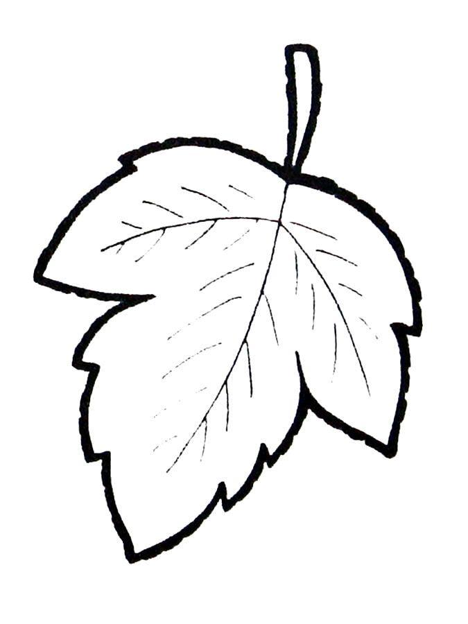 картинки для рисования листья деревьев домиком получили такое