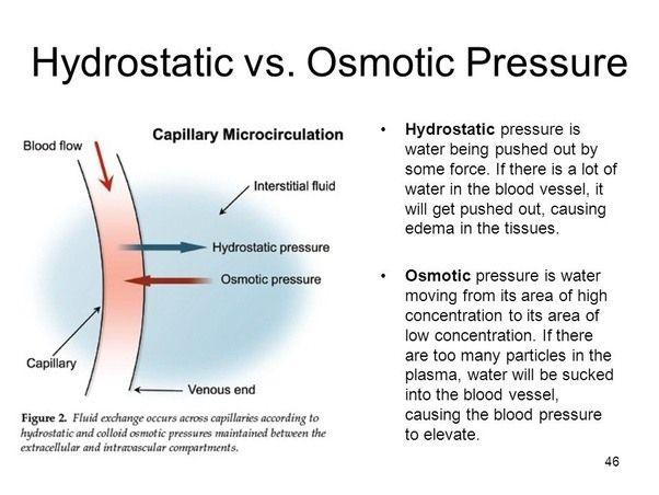 Image Result For Hydrostatic Pressure