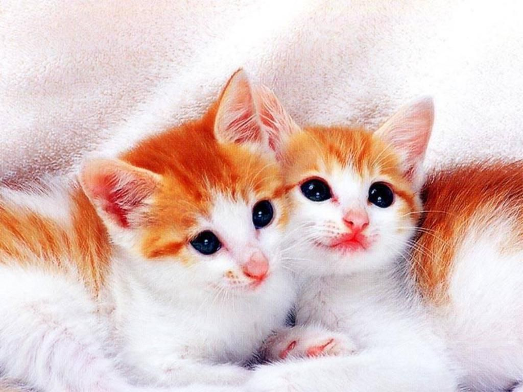 cute kittens & cats photos