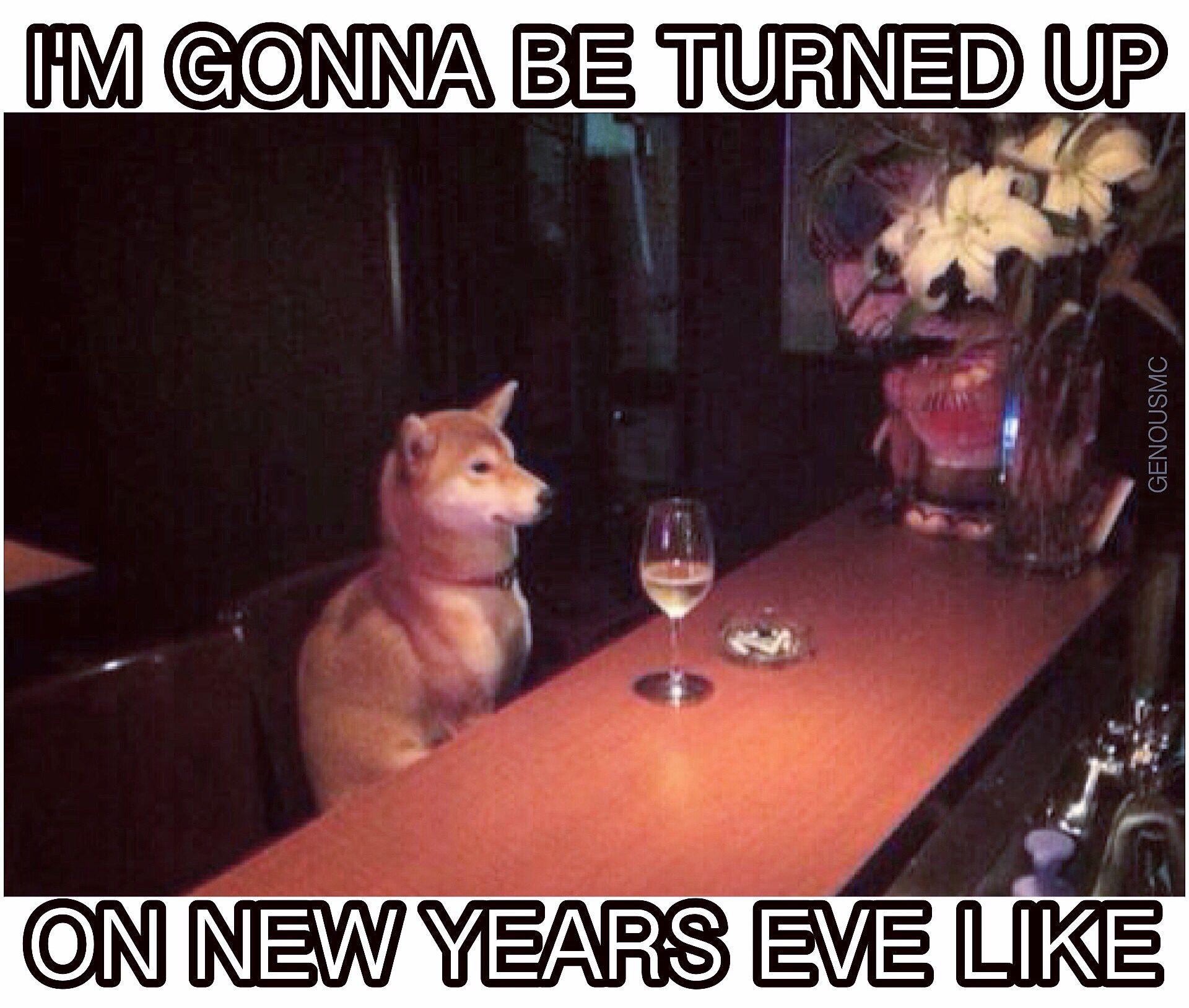 New Years Eve New Years Eve Meme New Years Eve Animal Lover Humor