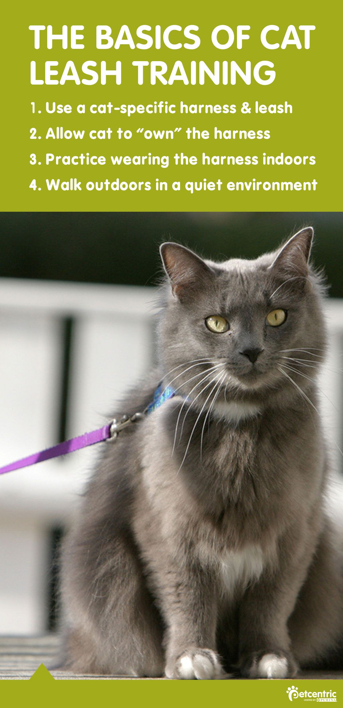 Safe And Fun Outdoor Activities To Enjoy With Your Cat Cat Training Cat Leash Leash Training