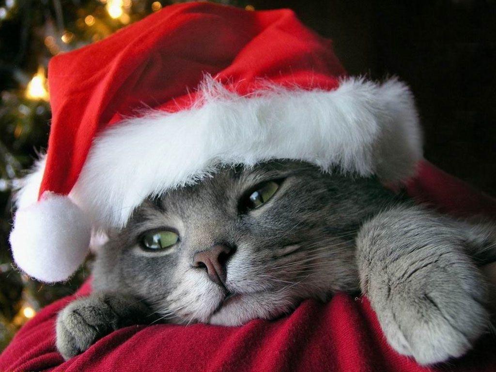 Smokey Christmas Cute Cats Merry Christmas Cat Pet Holiday