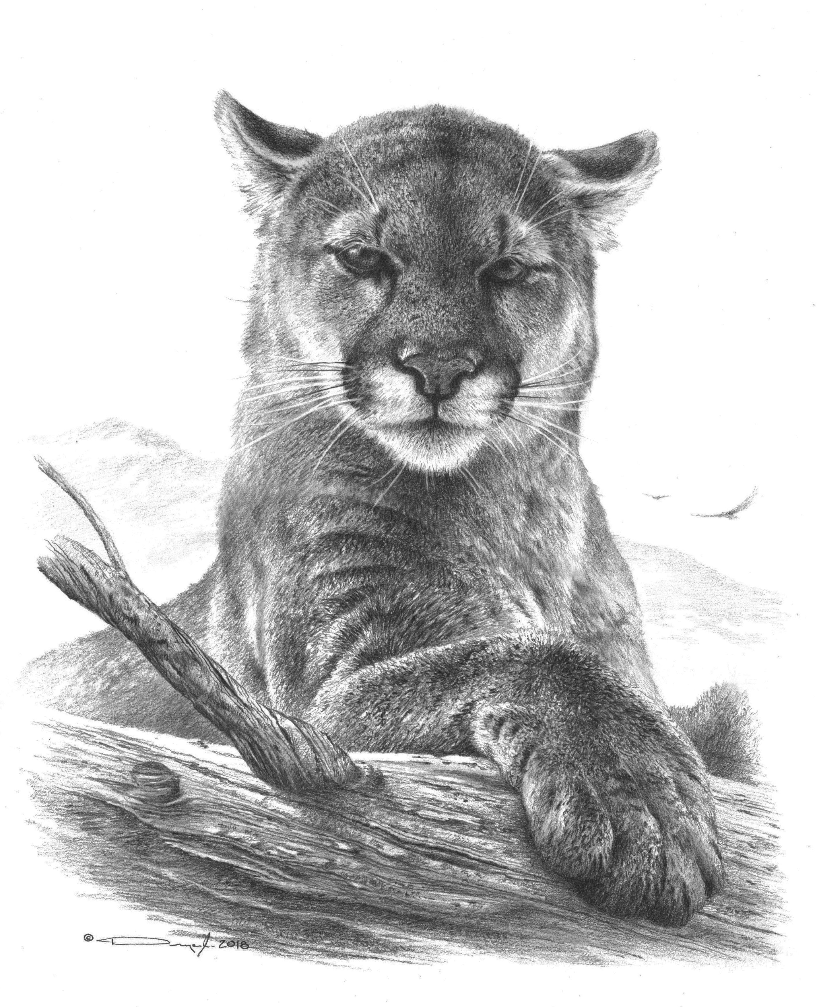 Mountain Lion Tattoo Idea With Images Animal Sketches Animal