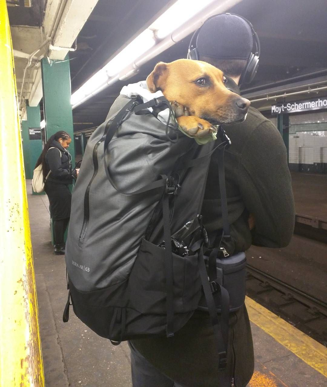 Dog owners cleverly flout subway rules, bring pets in bags