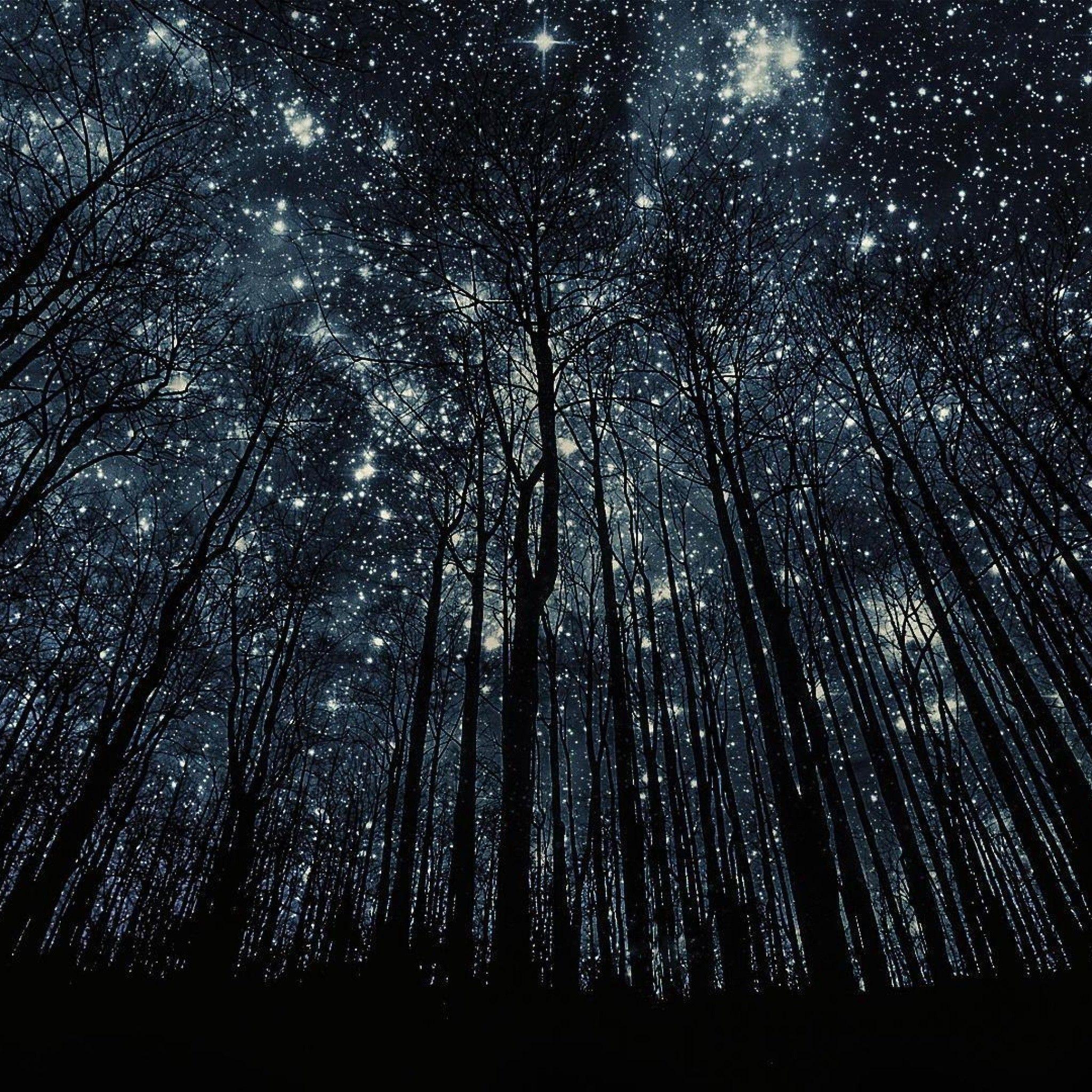 人気130位 星空の森 Ipad タブレット壁紙ギャラリー 月の写真 携帯電話の壁紙 星空