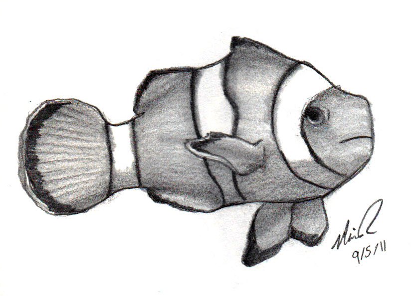 Line Drawing Clown Fish Google Search With Images Drawings