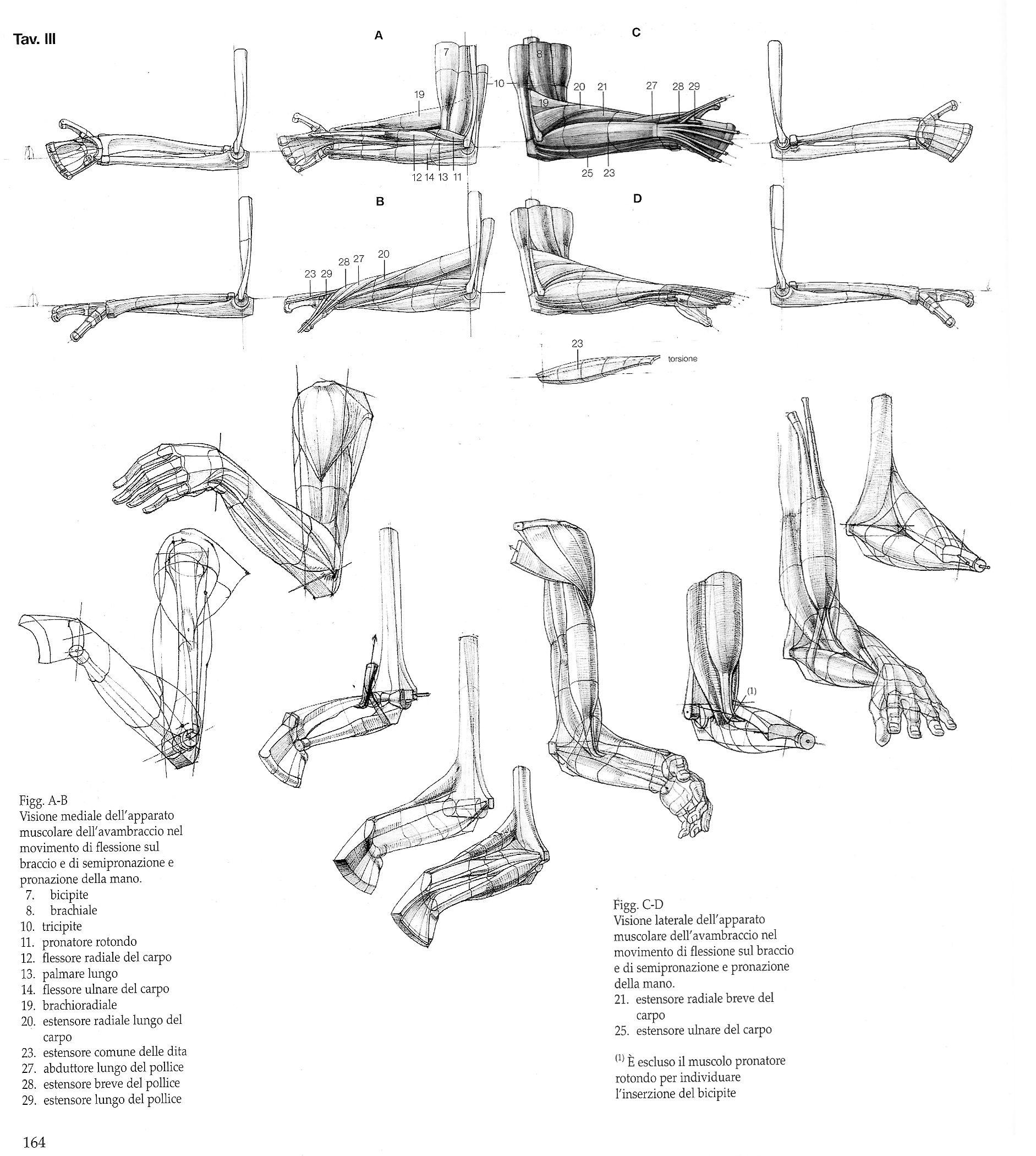 Struttura Uomo\'\' by Alberto Lolli* • Blog/Website | (http://www ...