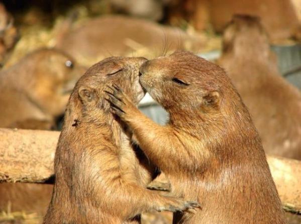 kissing haha