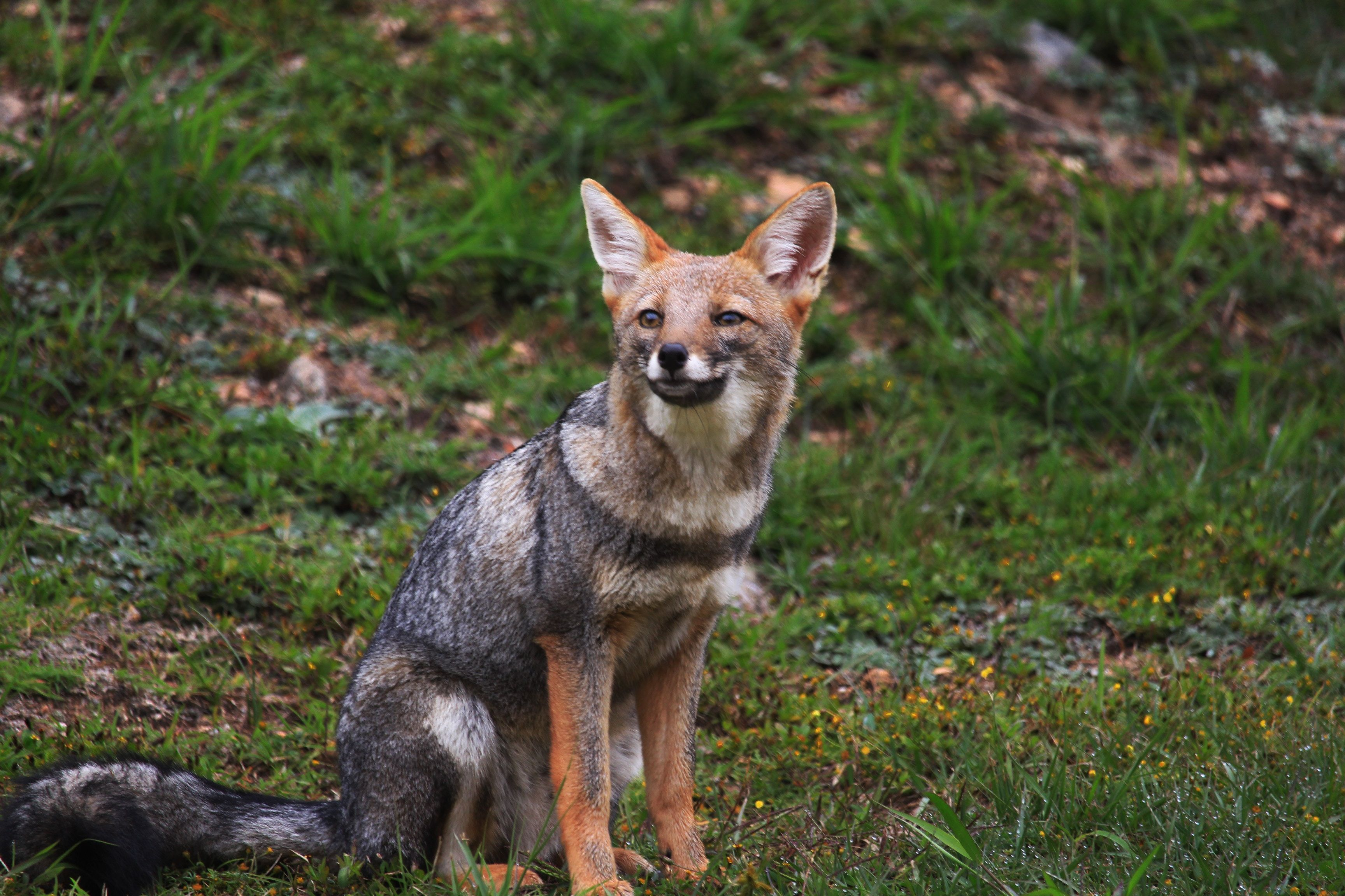 Keep Your Pets Feeling Foxy With Banixx Animal Care Pet Fox