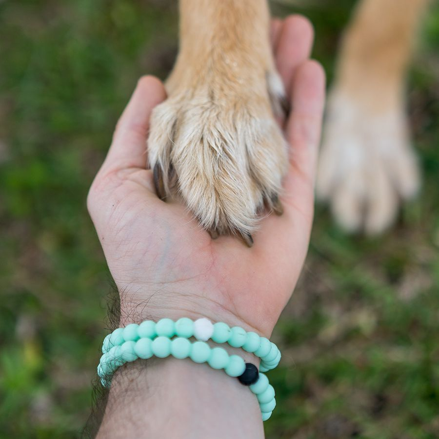 Reach Out And Help Your Animal Rescue Lokai Benefitting The