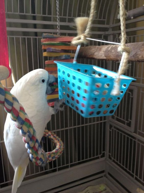 Genius DIY Bird Toy Ideas Parrot Stands Diy bird toys