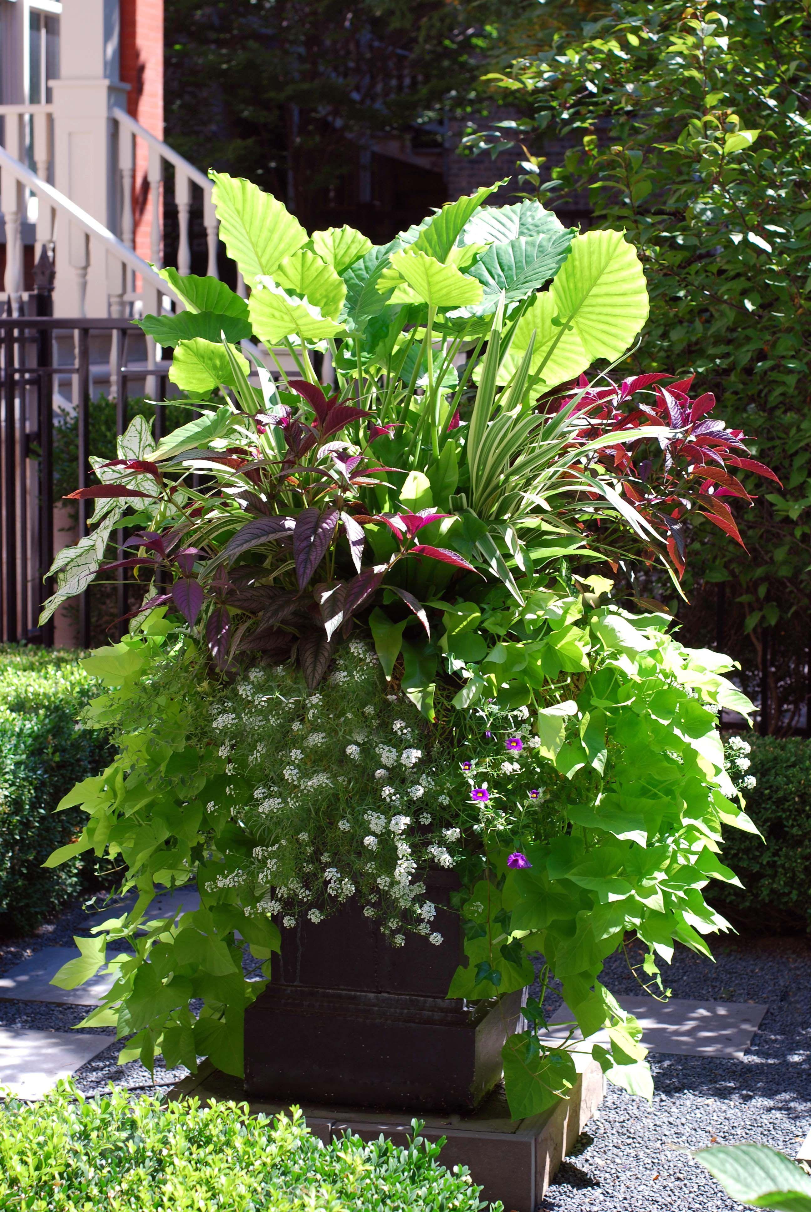 summer annuals
