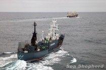 """Sea Shepherd Has """"Shut Down"""" Japan's Whale Hunt"""